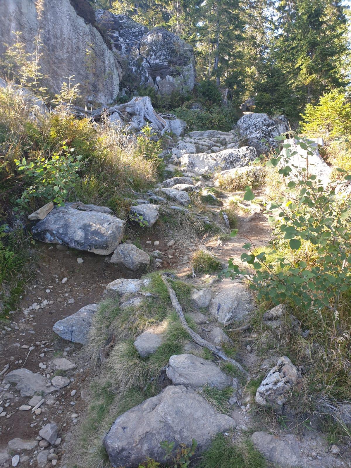 Trail ins Ziel