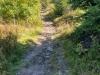 Trail zum Arber