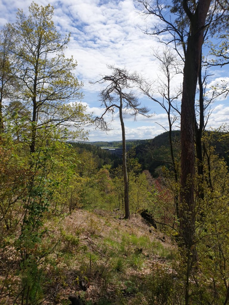 Aussicht Trail 4 Germany